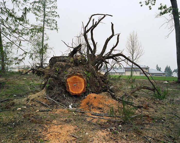 Roy Arden, Tree Stump, Nanaimo B.C., 1991